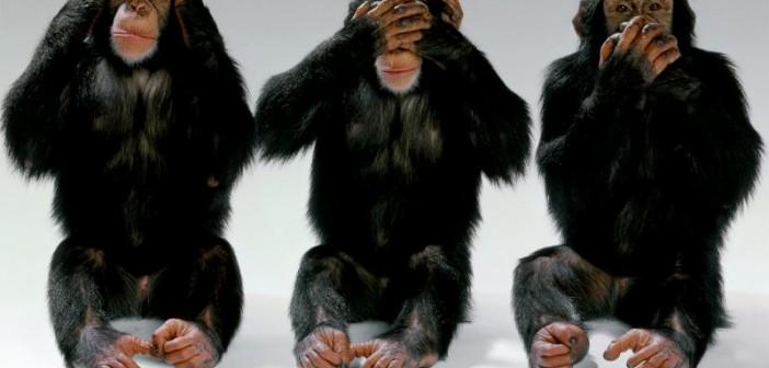 wildlife-monkeys-hear-no-evil-see-no-evil-speak-no-evil